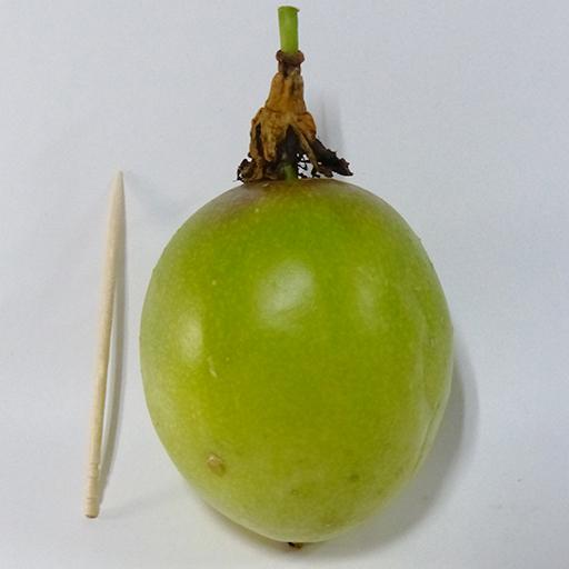 落果したパッションフルーツ