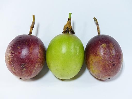 追熟したパッションフルーツと緑色のまま落下したパッションフルーツ